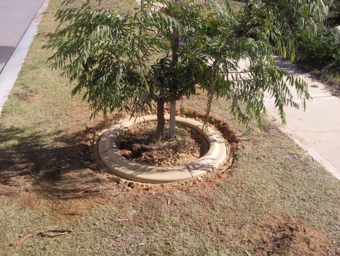 Kerbing mower edge around tree